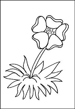 Blumen Natur Malvorlagen Und Ausmalbilder