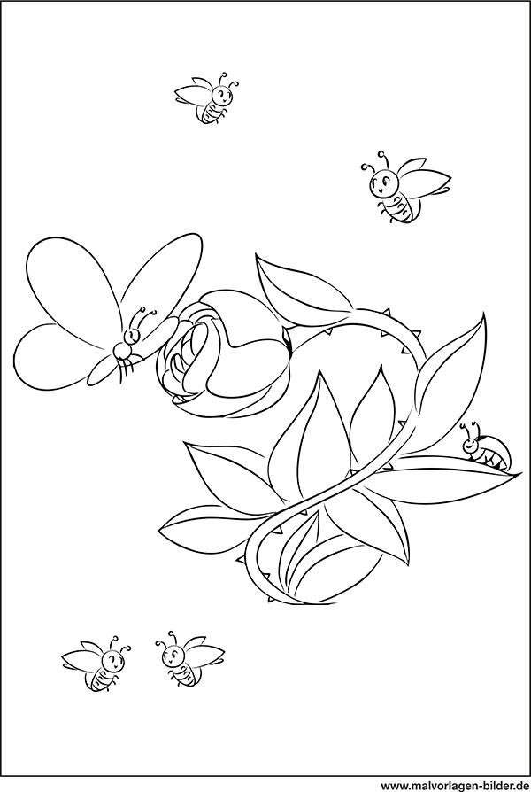 Blumen Schmetterling Kafer Gratis Malvorlagen