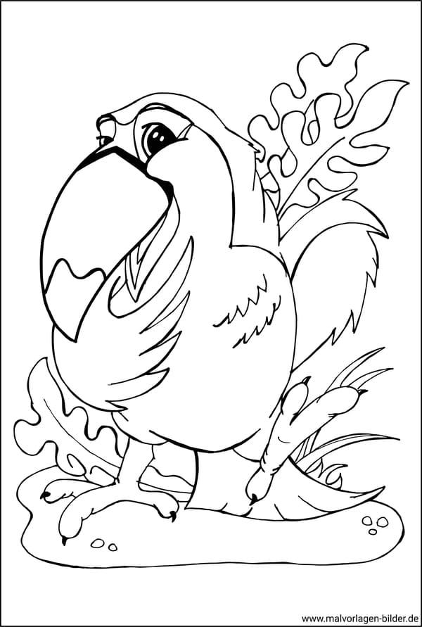 tukan vogel  malvorlagen für erwachsene