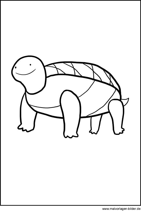 Gratis Ausmalbild Schildkröte Zum Ausdrucken