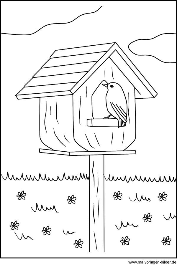 Vogel Im Vogelhäuschen Malvorlagen Und Ausmalbilder