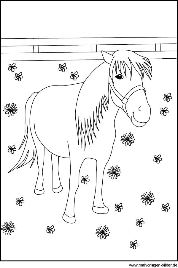 Malvorlage von einem Pony | Kostenlose Ausmalbilder für Kinder