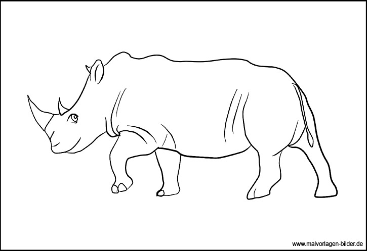 Ausmalbild Nashorn Malvorlagen Für Kinder