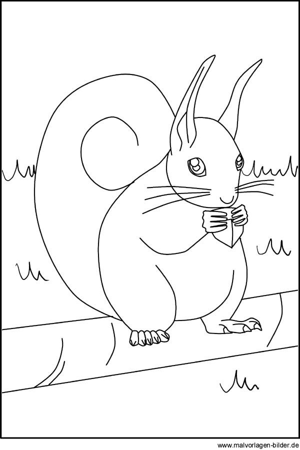Eichhörnchen Malvorlagen Zum Ausdrucken