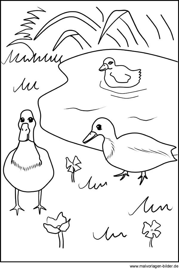 Gratis Malvorlage von Enten am Teich - Ausmalbilder für Kinder