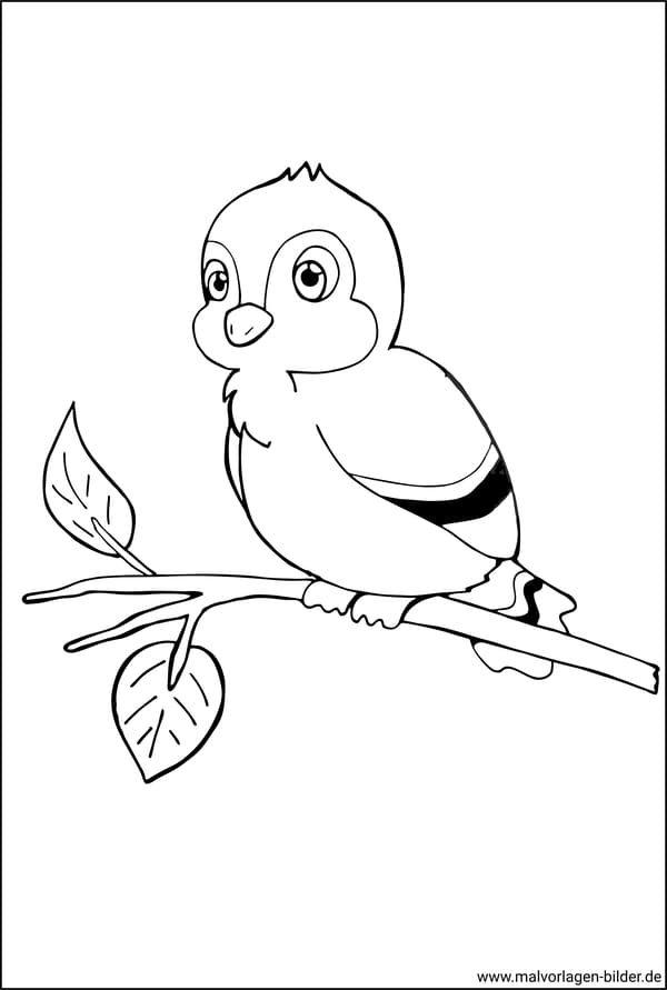 malvorlage - vogel auf einem ast