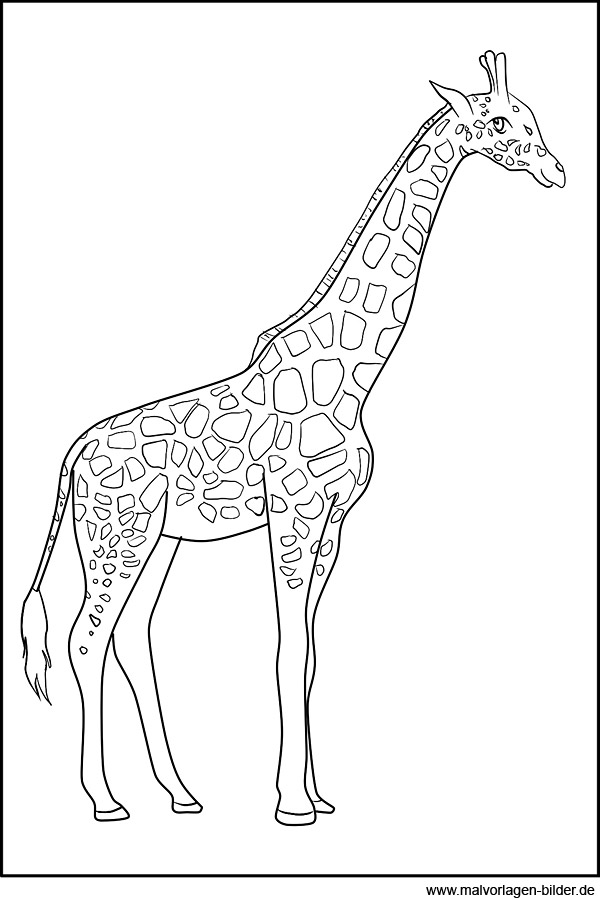Giraffe - Malvorlagen zum Ausdrucken